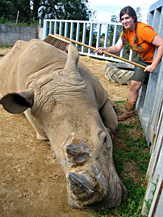 white rhinos, zoo keeper