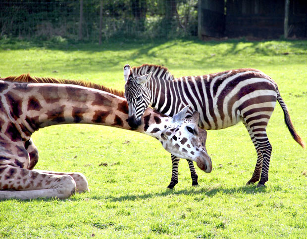 Big Zoo Animals South West