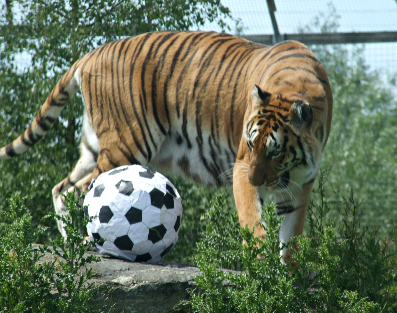 Tiana4 Noah%27s Ark_World Cup14