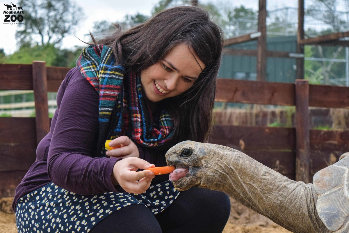 A girl ists next to and feeds a giant tortoise a carrot