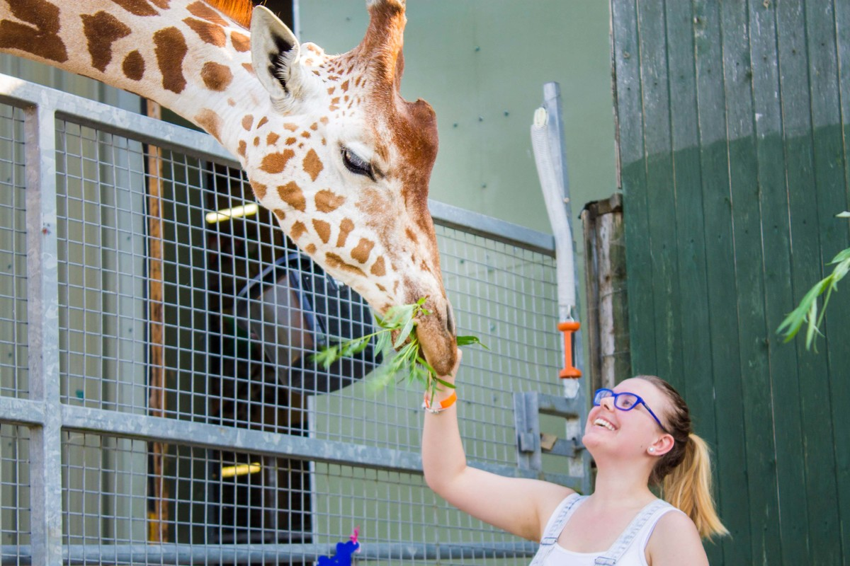 Woman feeding a giraffe during her animal experience