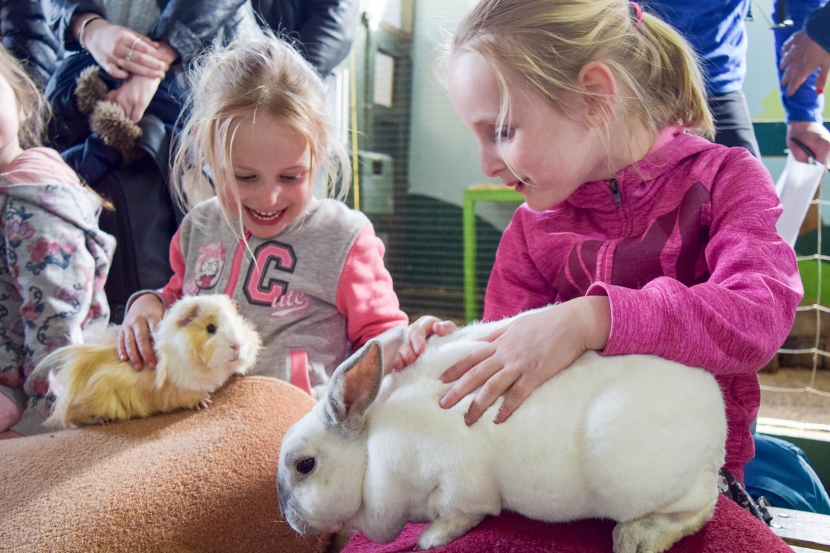 two girls stroke a rabbit and guinea pig