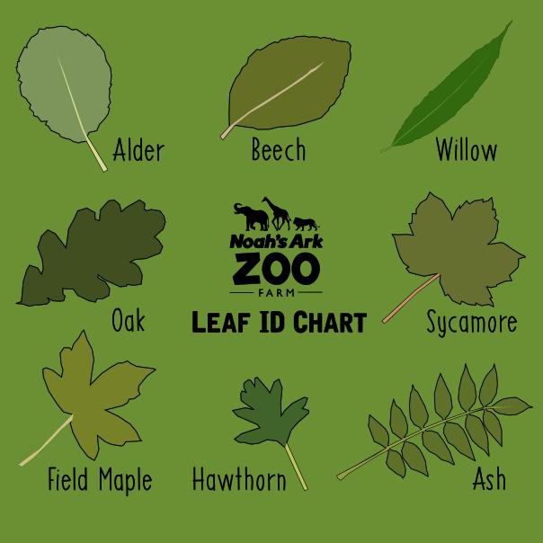 Leaf ID chart
