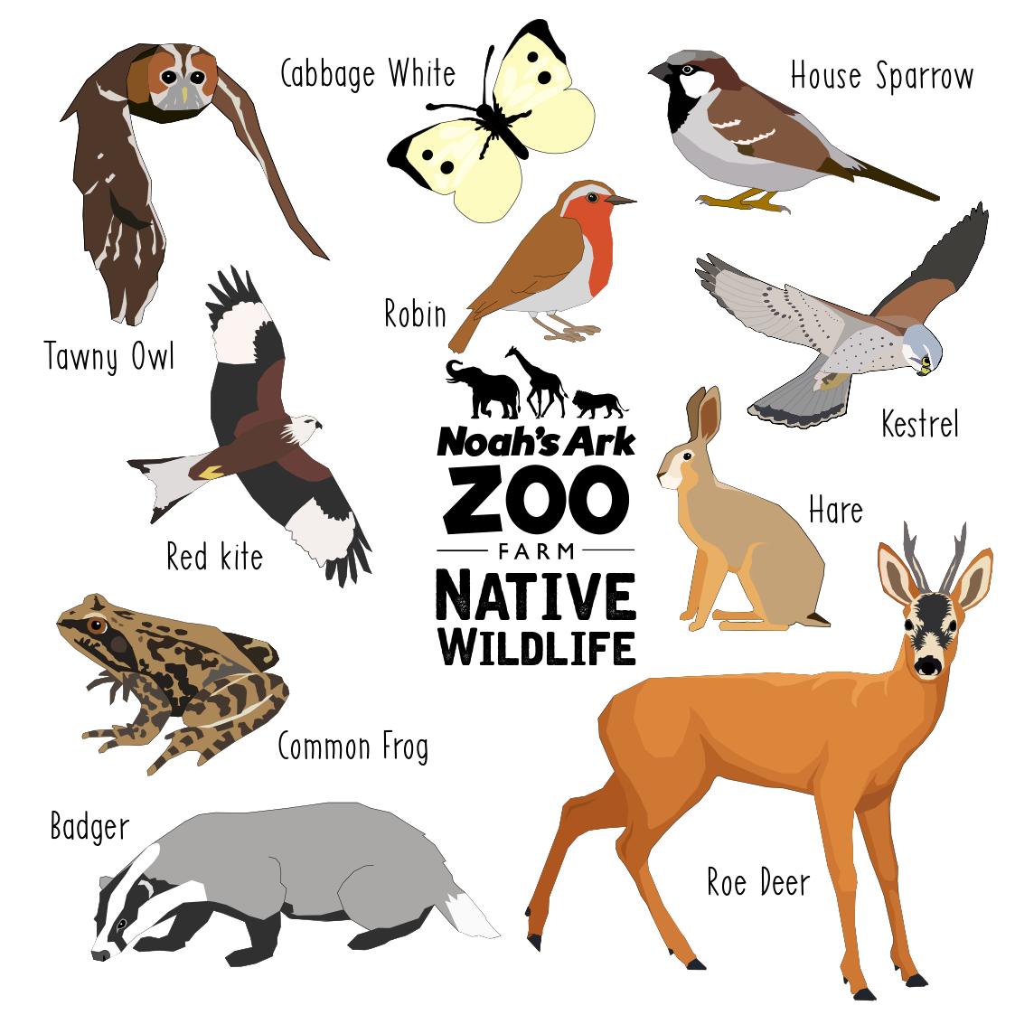 Native Wildlife images