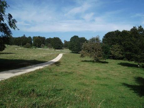 Weg in Waldweide / Romontberg