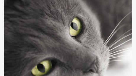 Die Katzenaugen
