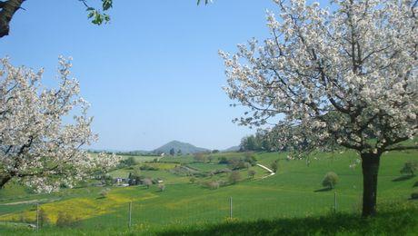 Bluescht bei Olsberg, Fricktal