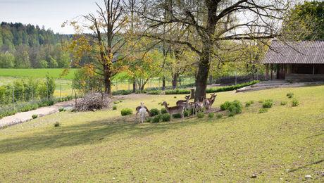 Hirschpark Fulenbach