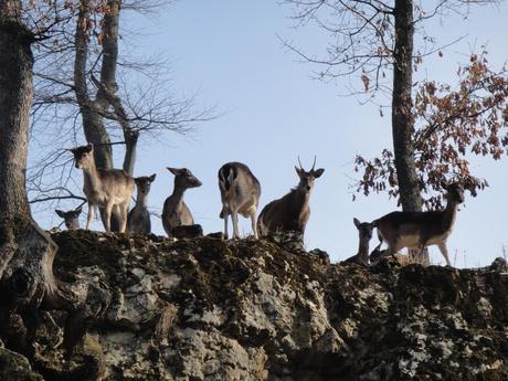 Tierpark Mühletäli