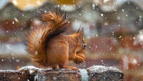 Sonderausstellung: Eichhörnchen