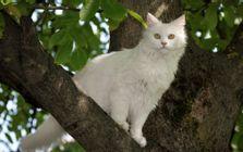 Die Katze als Kletterin