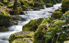 Der Cholersbach in der Tüfelsschlucht