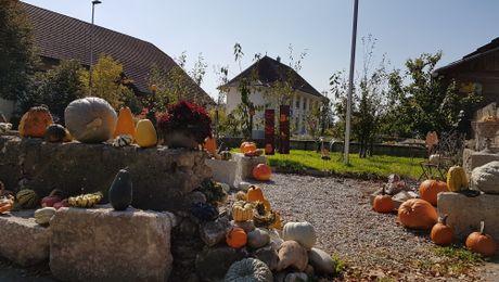Niederbuchsiten im Herbst