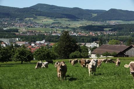 Gemeinde Dulliken