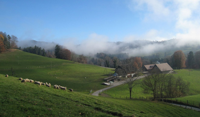 Alpwirtschaft Schnurrberg
