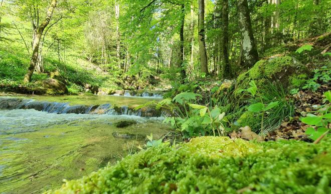 Shinrin Yoku – Forest Bathing