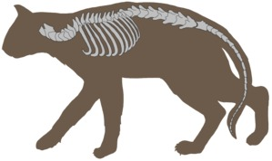 Wirbeltiere – Beispiel Säugetier mit Wirbelsäule (schematisch)