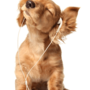 Hund lackkratzer
