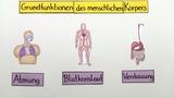 Grundfunktionen des menschlichen Körpers