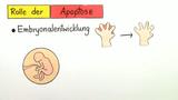 Apoptose – genetisch programmierter Zelltod