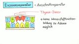 DNA-Schäden und Reparaturmechanismen