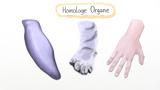 Homologie – Homologe Organe als Beleg der Evolution