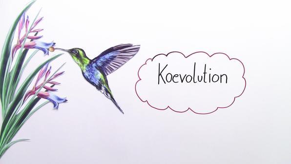 11169 koevolution