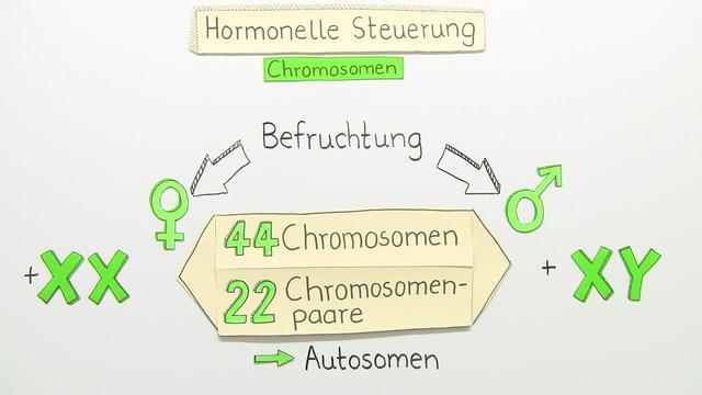 Geschlechtshormone – Funktion und Bedeutung