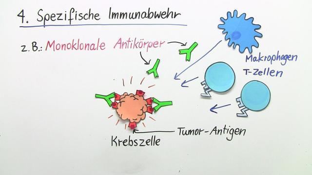 Immuntherapie – Behandlung von Krebs