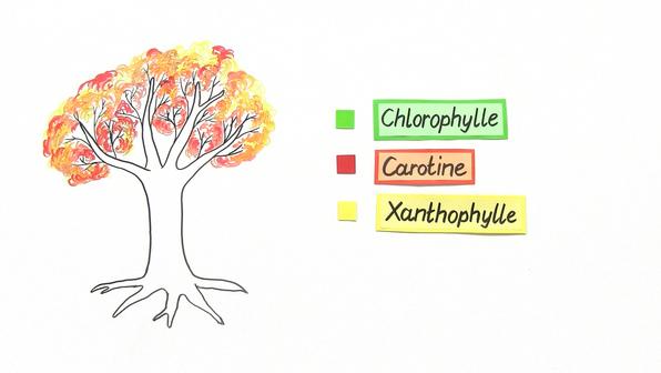 11519 chromatographie der blattfarbstoffe.vorschaubild3