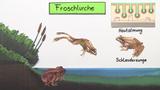 Froschlurche – Grasfrosch und Erdkröte