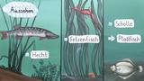 Fische – Anpassung an den Lebensraum