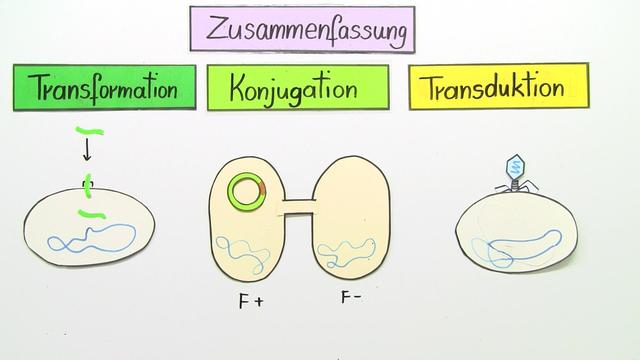 natürlicher Gentransfer – Transformation, Konjugation, Transduktion