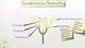 Blüte – Aufbau und Funktion