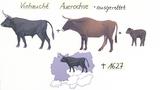 Abstammung und Verwandtschaft des Hausrindes