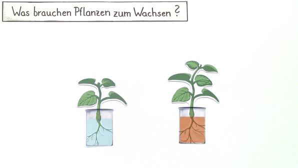 12659 pflanzen brauchen licht  wasser und mineralien.vorschau