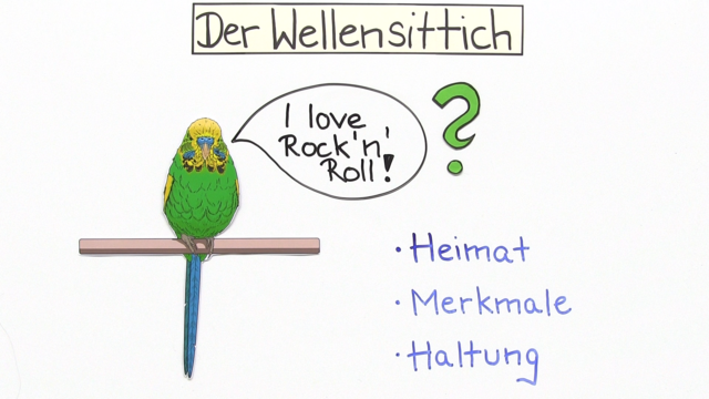 Wellensittich
