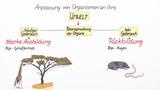 Lamarck – Theorie über die Veränderung der Arten