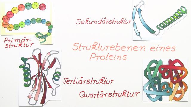 Der räumliche Aufbau von Proteinen