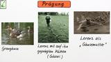 Prägung – besondere Form des Lernens