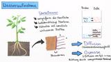 Nährstoffversorgung bei Pflanzen – Kohäsion und Adhäsion