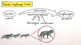 Kommunikation im Tierreich
