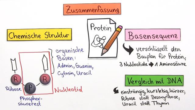 RNA – Bau und Funktion