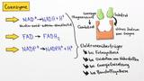 Cofaktoren – Einteilung, Struktur und Funktion