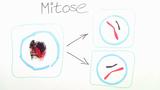Grundlagen der Mitose