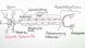 Nervenzelle und Synapse – Weg der Informationsverarbeitung