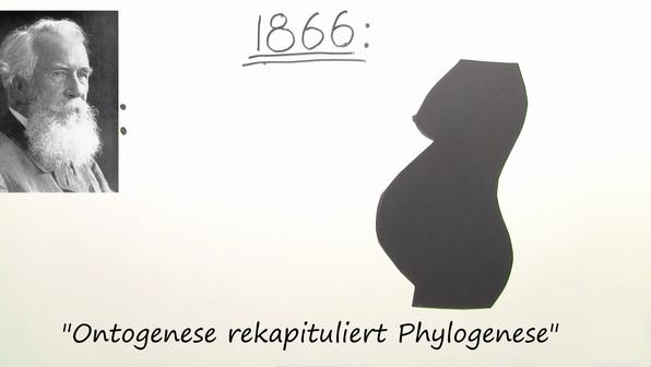Biogenetische grundregel