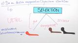 Die Selektion – Darwins Evolutionstheorie