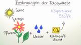 Fotosynthese – nötige Umweltvoraussetzungen