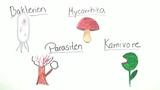 Ernährungsspezialisten Pflanzen